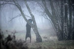 Ein nebeliger Morgen in der Heide... 2012