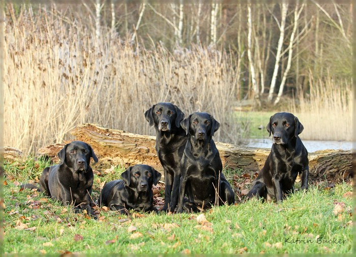 Leo, Flame, Fly, Gina und Doughal 2012