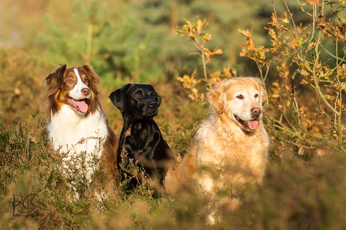 Drei wunderschöne Hunde…